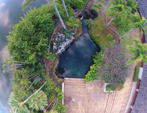 Kanewai Spring Complex (2015)